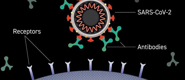 Anticorpi monoclonali per SARS-COVID2 alternativa di cura?